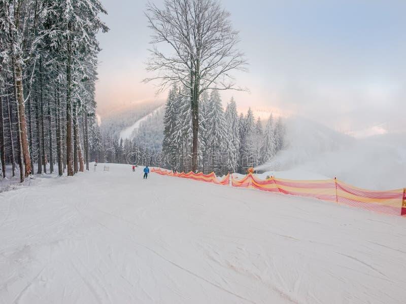 Наклон лыжи среди елевого леса в лыжном курорте в Карпатах стоковые изображения rf