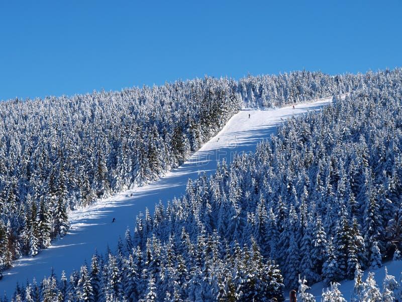 наклон лыжи стоковые изображения rf