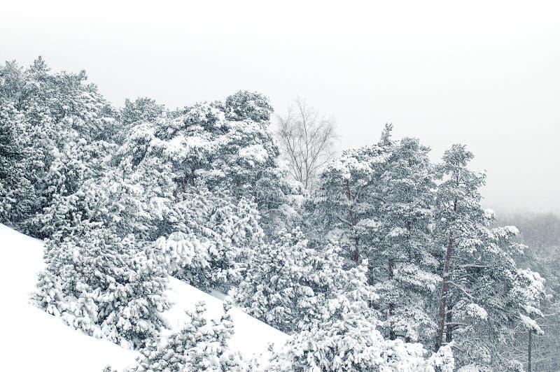 наклон снежный стоковая фотография