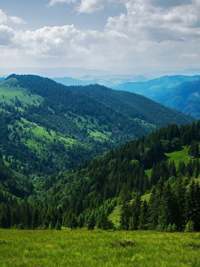Наклоны горы предусматриваны в лесах стоковые фотографии rf