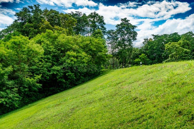 Наклон травы стоковые изображения rf