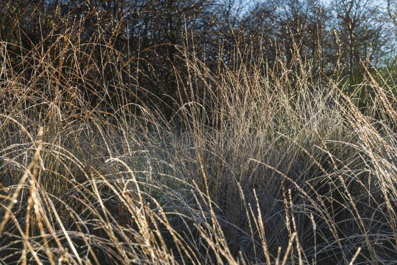 Налет инея на травах стоковое фото rf