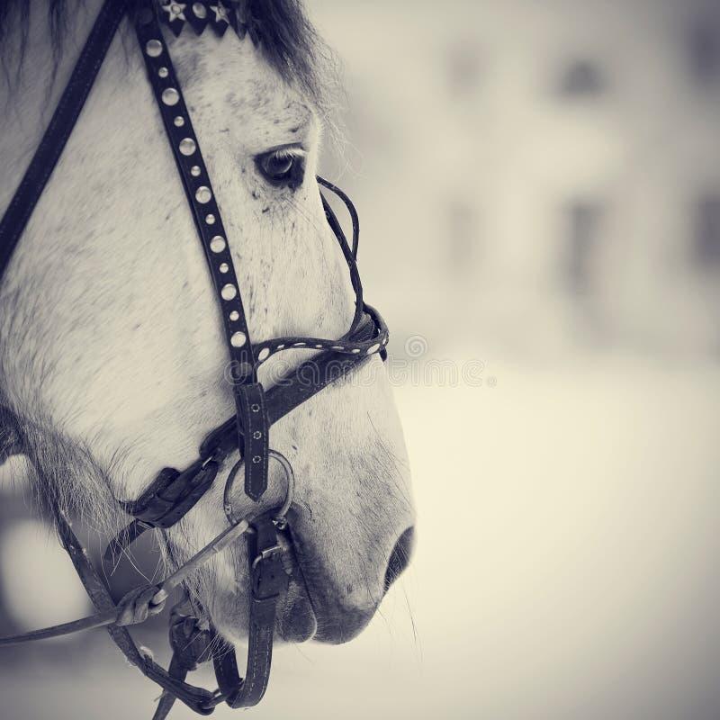 Намордник белой лошади в проводке стоковые изображения