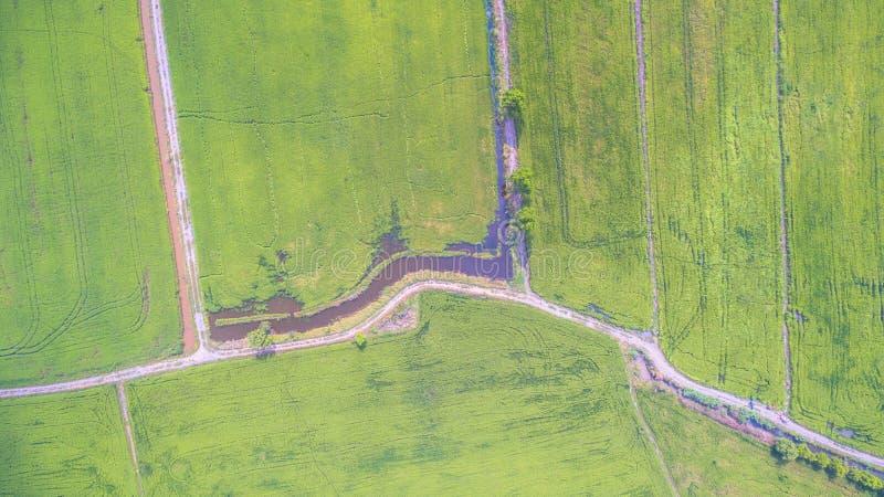 Намочите в маленьком канале для того чтобы позеленеть поля риса стоковые изображения rf