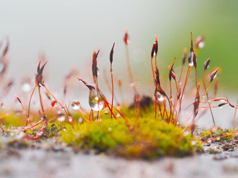 Намочите зеленые sphagnum мха и семена мха в падениях воды от стоковые изображения