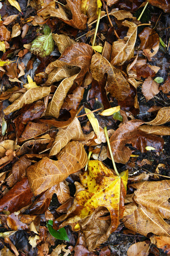 Намочите листья в осени стоковая фотография rf