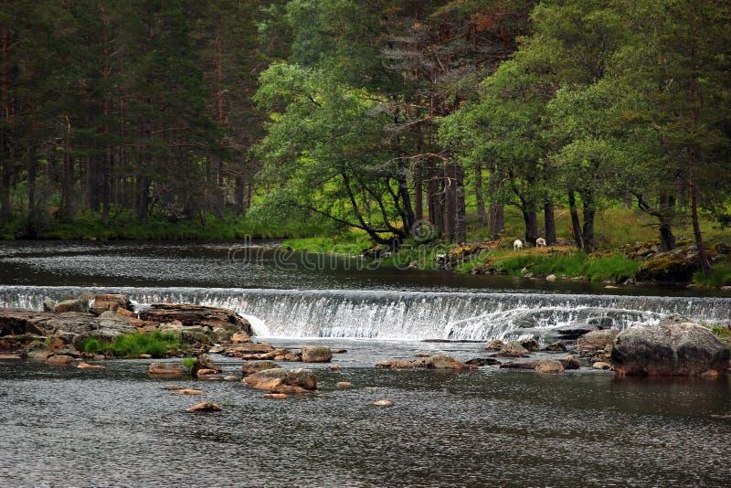 Намочите каскады на реке Sira в Sirdal, Норвегии стоковая фотография rf