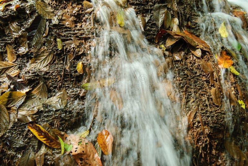 Намочите каскады на реке горы с упаденными листьями осени стоковое фото rf