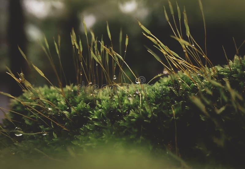 Намочите падение на траве стоковые изображения rf