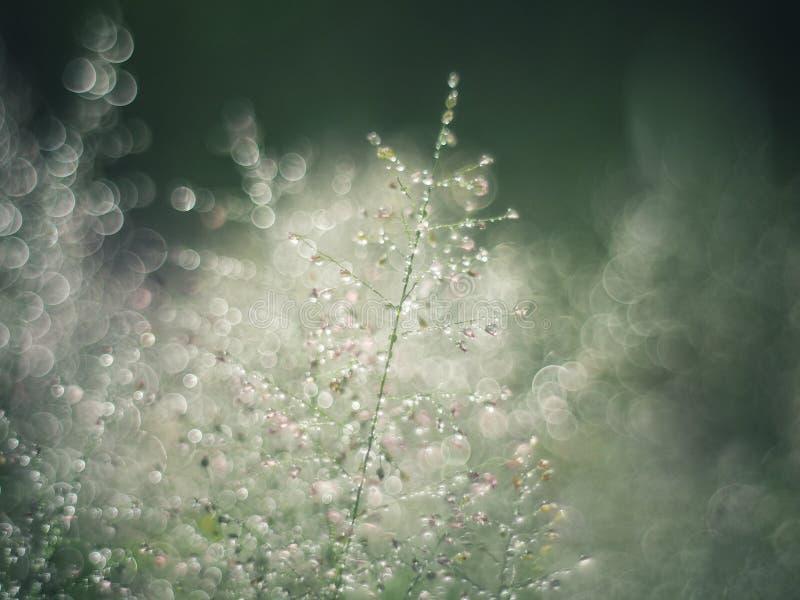 Намочите падения на солнечности и bokeh травы в сезоне дождей путем регулировать к небольшой нерезкости к воображению или мечте стоковые фотографии rf