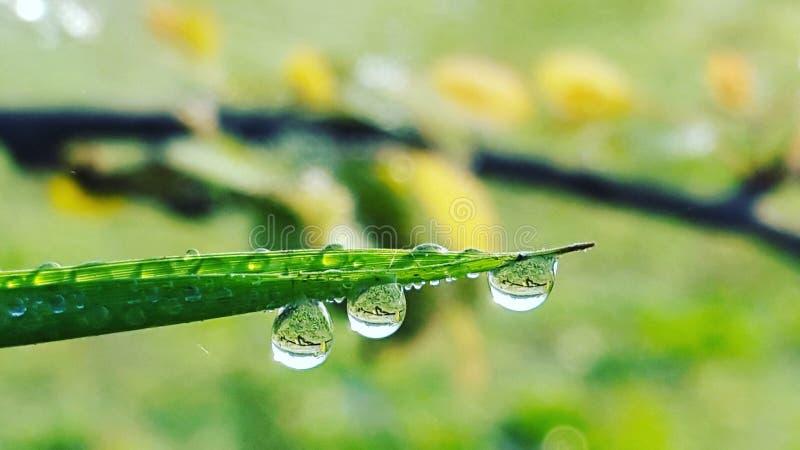 Намочите падение на траве стоковое изображение