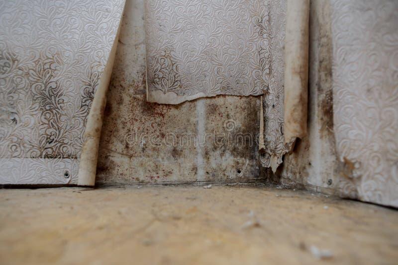 Намочите повреждение причиняя рост прессформы на внутренних стенах свойства стоковое фото