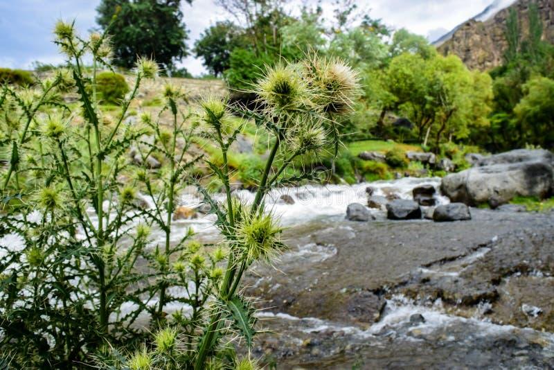 Намочите поток в зеленом лесе в Gilgit Пакистане стоковое фото