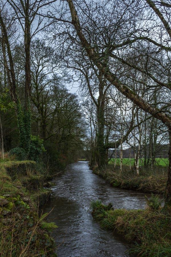 Намочите поток surronded деревьями на весенний день стоковое фото rf