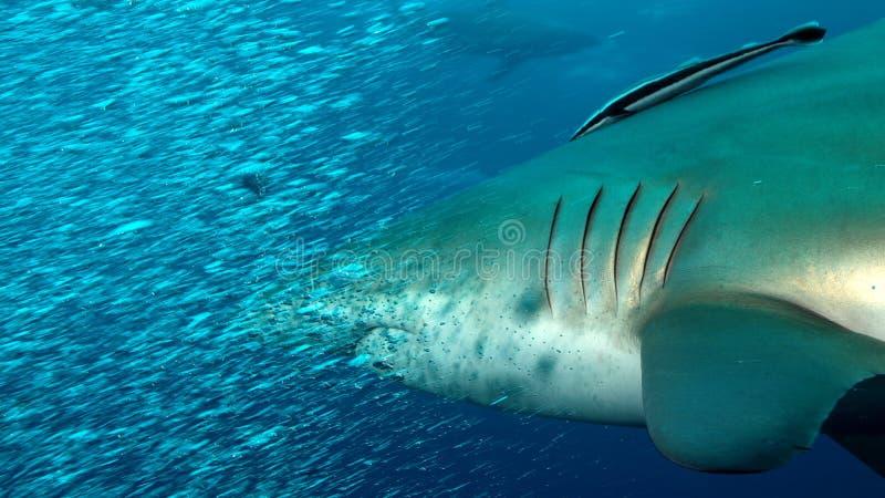 Нападение акулы быстрое стоковые фото
