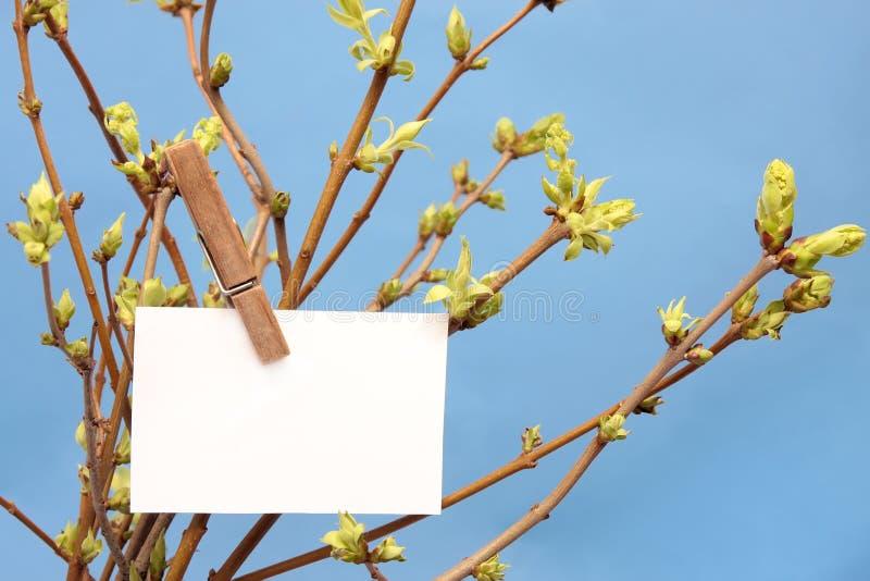 Написанная сообщением белая смертная казнь через повешение карточки на зеленое густолиственном стоковые фото