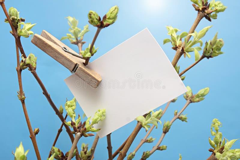 Написанная сообщением белая смертная казнь через повешение карточки на зеленое густолиственном стоковая фотография