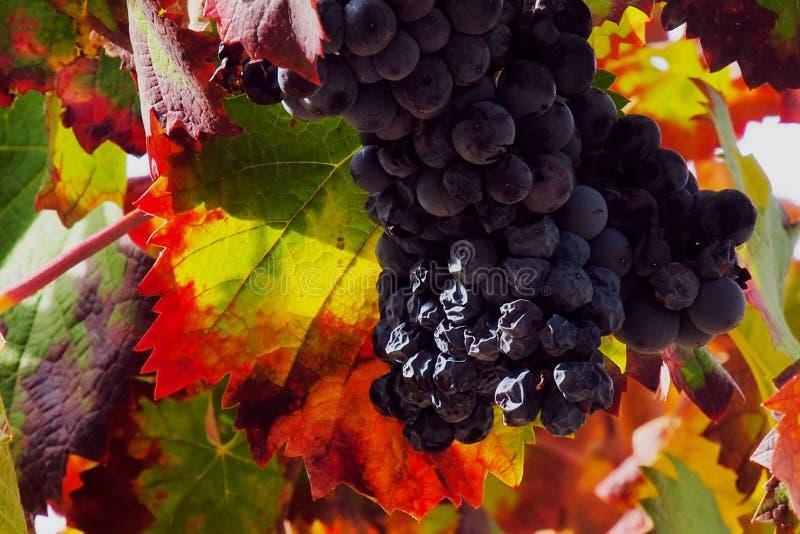 Напряжение красного вина стоковые фото