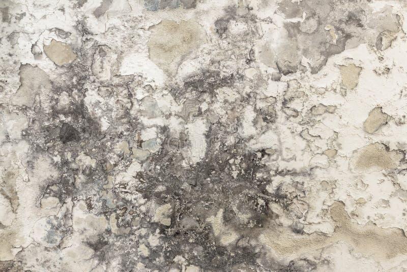 Нарастание прессформы и влаги на стене стоковая фотография rf