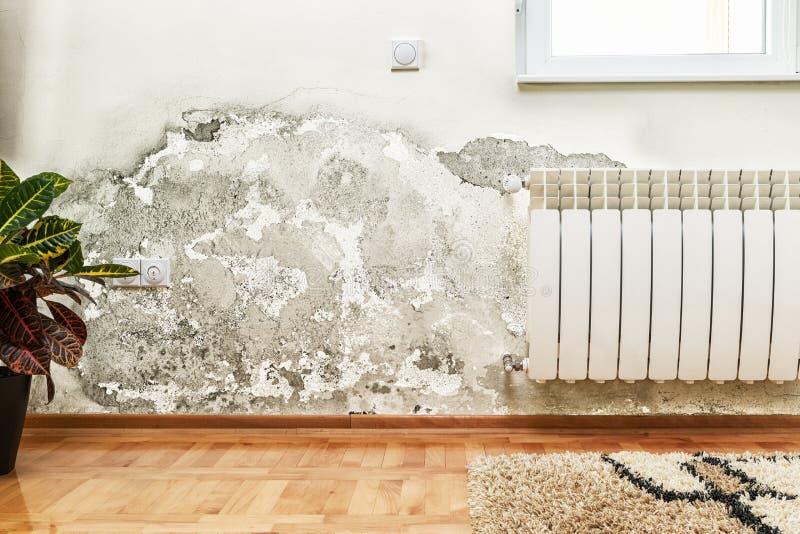Нарастание прессформы и влаги на стене современного дома стоковые фото