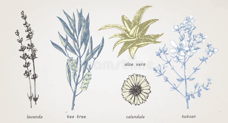 Нарисованная вручную иллюстрация медицинских трав и заводов вектор иллюстрация штока