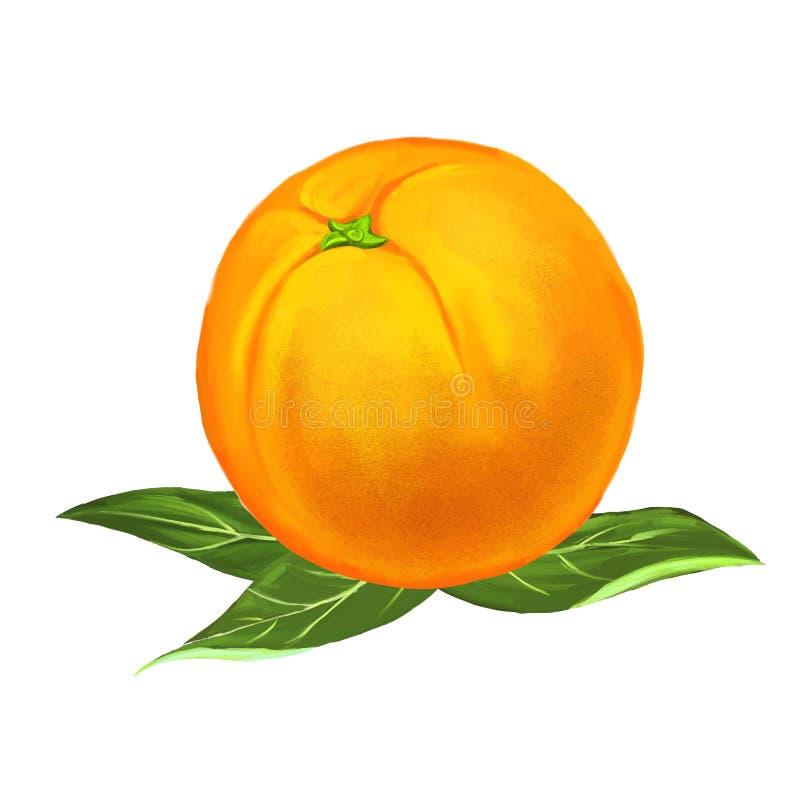 Нарисованная рука иллюстрации вектора плодоовощ оранжевая бесплатная иллюстрация