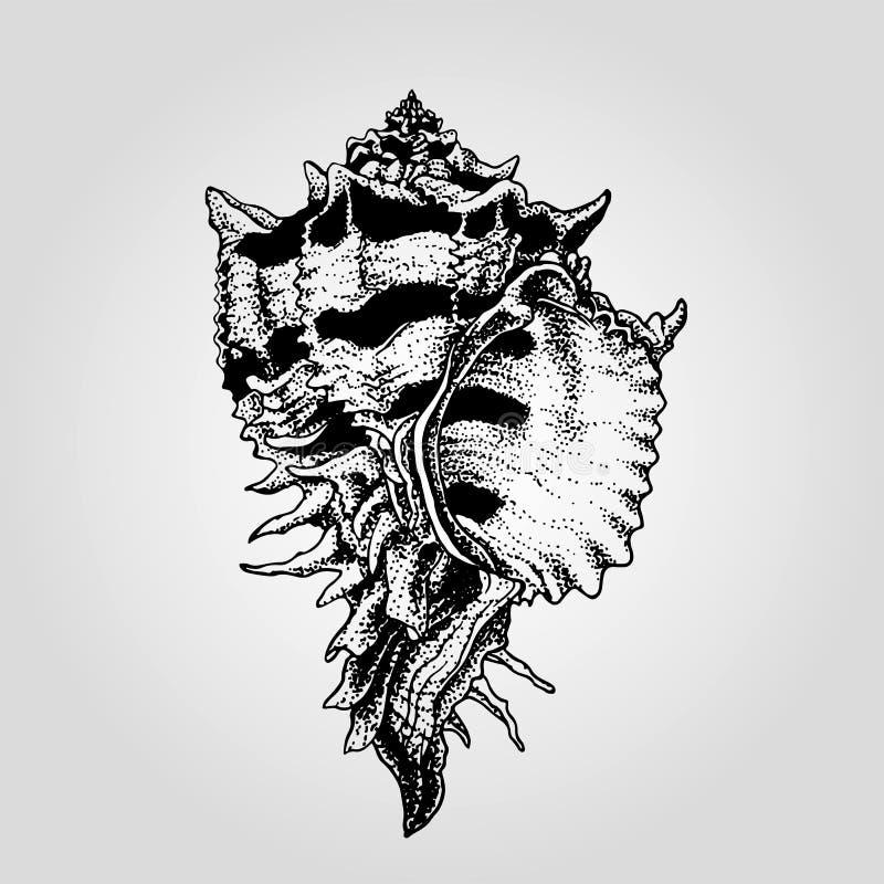 Нарисованная рукой винтажная раковина моря иллюстрация вектора