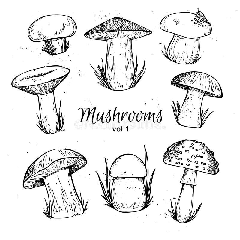 Страница книжка-раскраски с грибами Иллюстрация вектора ...