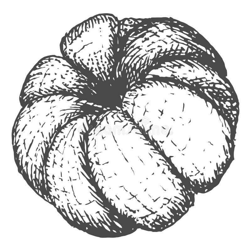 Нарисованная рукой иллюстрация вектора оранжевого плодоовощ мандарина иллюстрация вектора