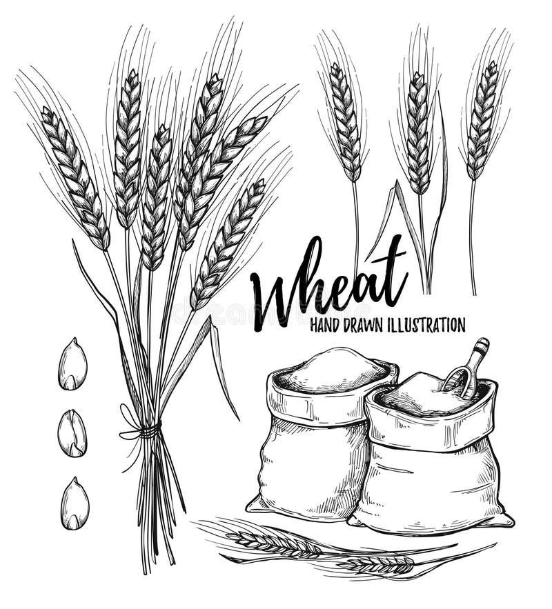 Нарисованная рукой иллюстрация вектора - пшеница элементы конструкции соплеменные иллюстрация штока