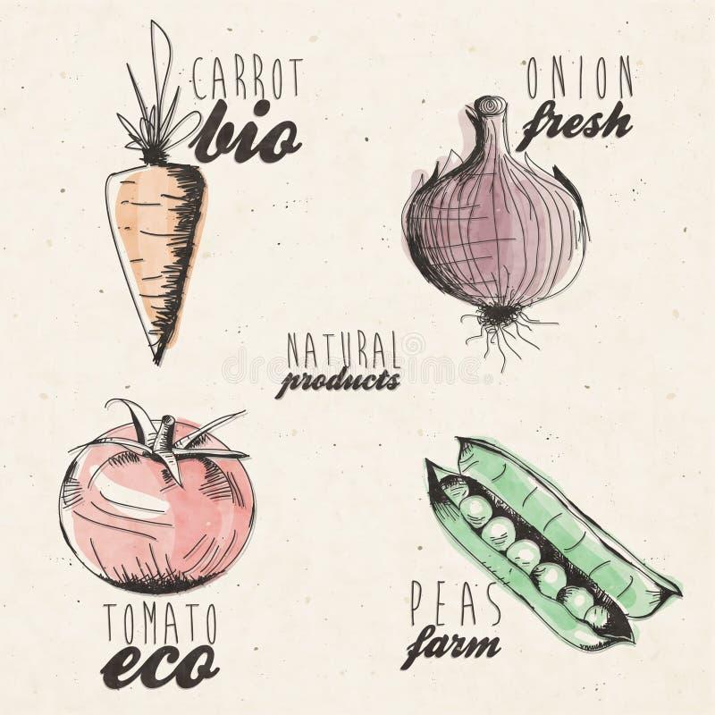 Нарисованная рукой иллюстрация овощей иллюстрация вектора