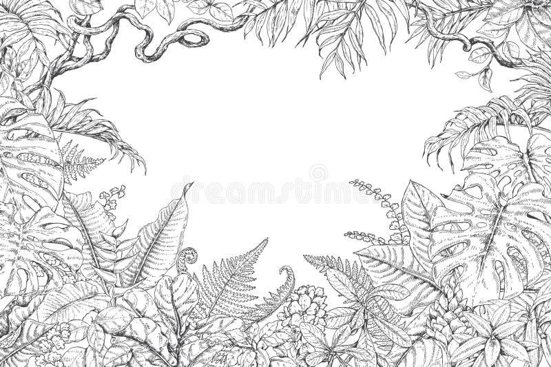 Нарисованная рукой рамка тропических заводов иллюстрация штока