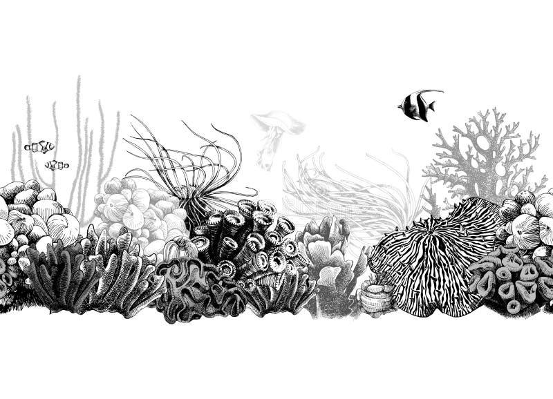 Нарисованная рукой черно-белая граница коралла бесплатная иллюстрация