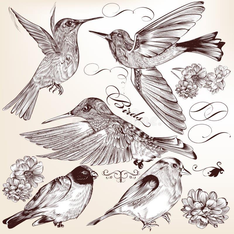 Нарисованное собрание руки вектора детализировало птиц для дизайна бесплатная иллюстрация