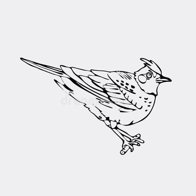Нарисованные вручную графики карандаша, жаворонок, Иволговые, chickadee, воробей, bl иллюстрация вектора