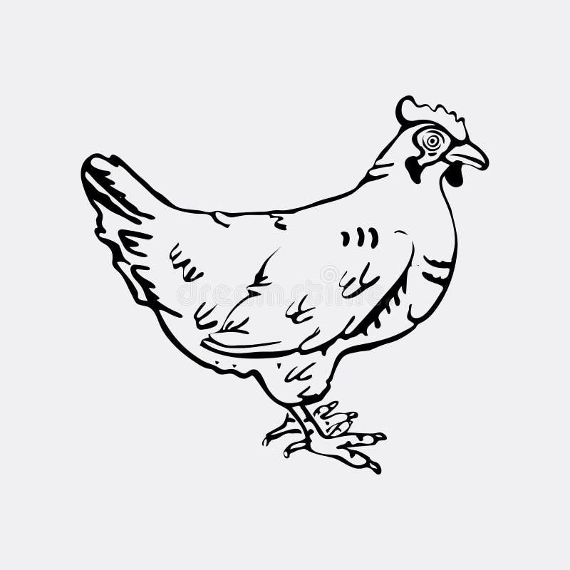 Нарисованные вручную графики карандаша, курица Гравировка, стиль восковки иллюстрация штока