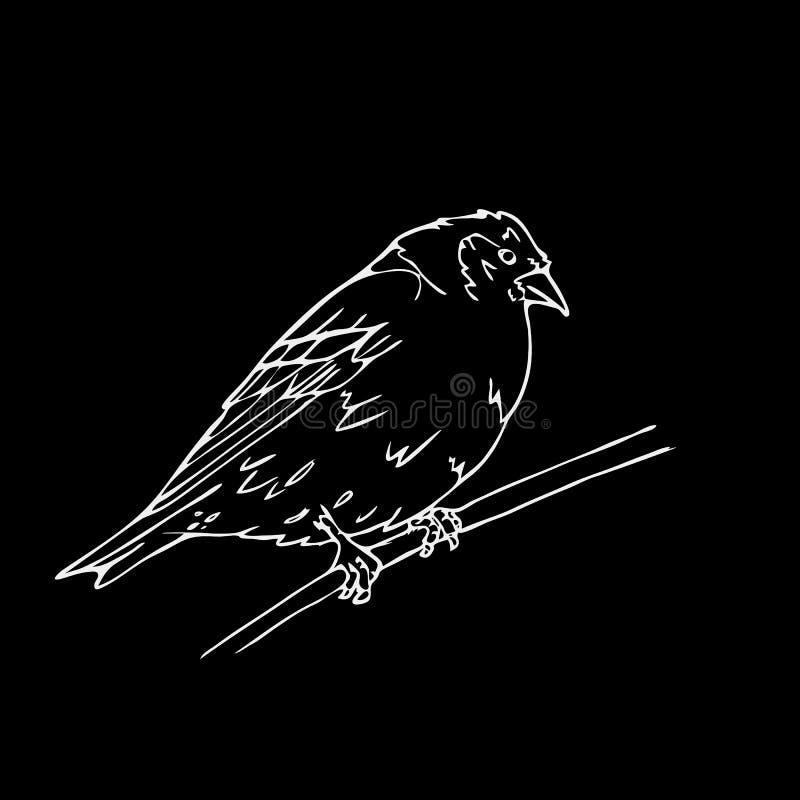 Нарисованные вручную графики карандаша, малая птица Гравировка, стиль восковки иллюстрация вектора