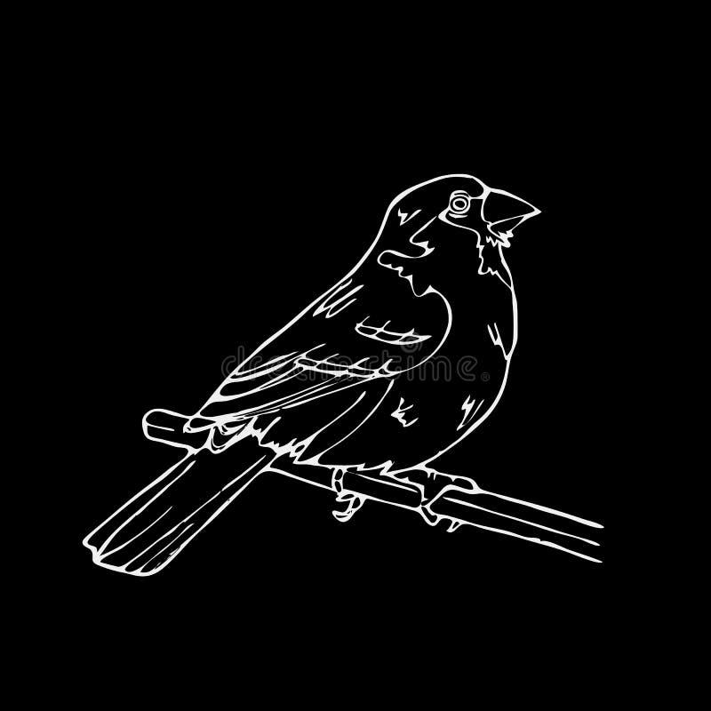 Нарисованные вручную графики карандаша, малая птица Гравировка, стиль восковки иллюстрация штока