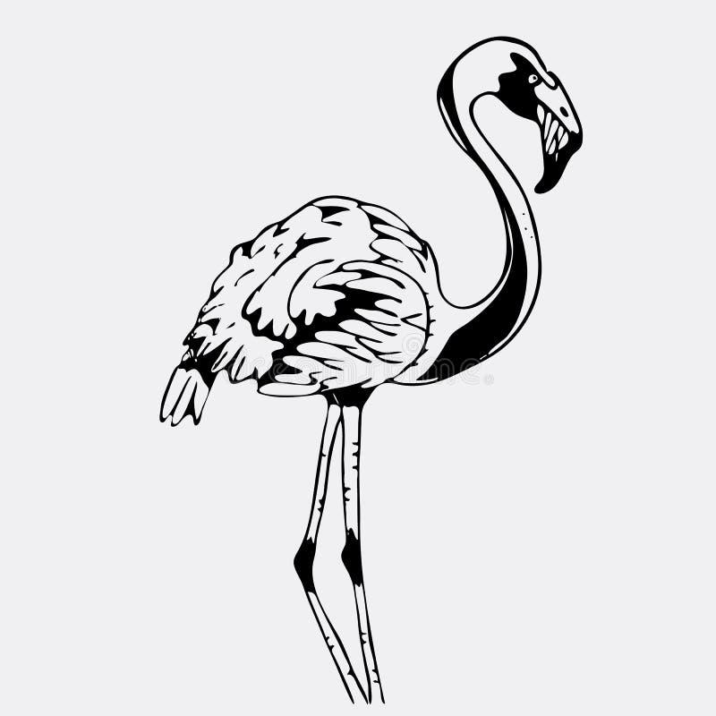 Нарисованные вручную графики карандаша, птица, фламинго Гравировка, восковка s иллюстрация вектора