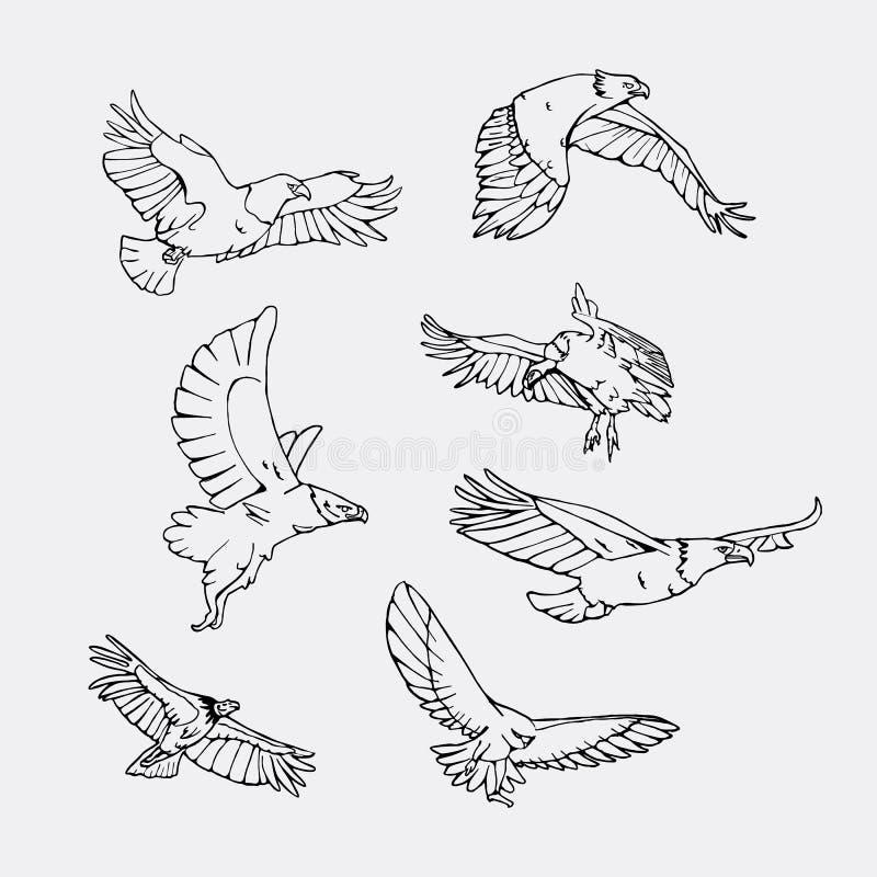 Нарисованные вручную графики карандаша Установленные хищные птицы бесплатная иллюстрация