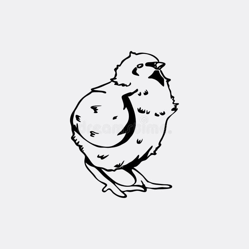 Нарисованные вручную графики карандаша, цыпленок, цыпленок Гравировка, восковка s иллюстрация вектора