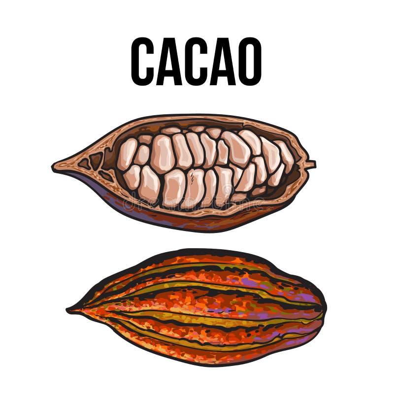 Нарисованные рукой все и половинные плодоовощи какао бесплатная иллюстрация
