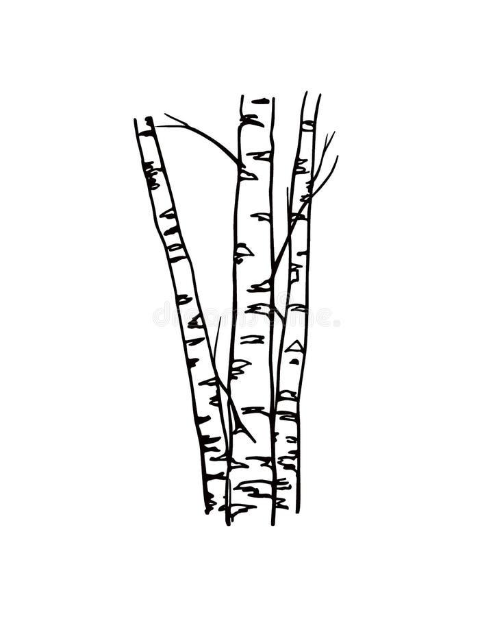 картинка контур березы без листьев это непосредственно