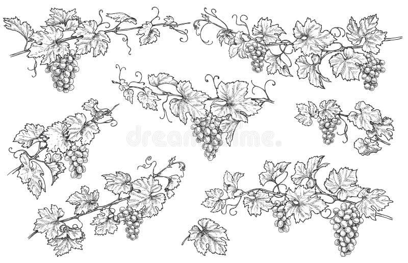 Нарисованные рукой установленные ветви виноградины иллюстрация вектора