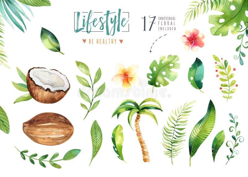 Нарисованные рукой установленные заводы акварели тропические Экзотические листья ладони, дерево джунглей, элементы ботаники Брази иллюстрация штока