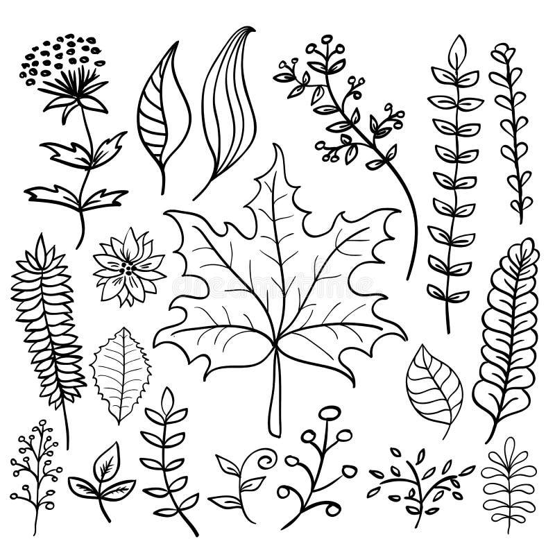 Нарисованные рукой установленные листья вектора doodle бесплатная иллюстрация