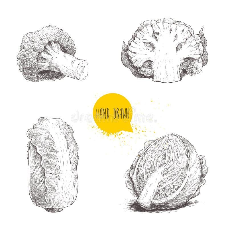 Нарисованные рукой установленные капусты стиля эскиза Половина головы капусты, цветной капусты части, брокколи и китайской капуст иллюстрация штока