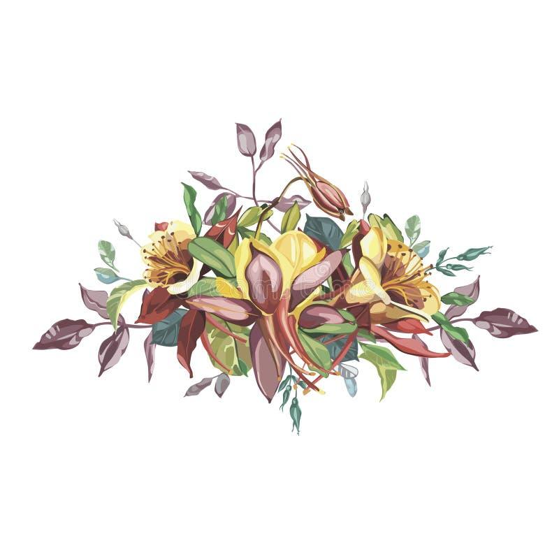Нарисованные рукой цветки акварели установили букет Aquilegia Красивые реалистические элементы вектора Отсутствие прозрачность и  иллюстрация вектора