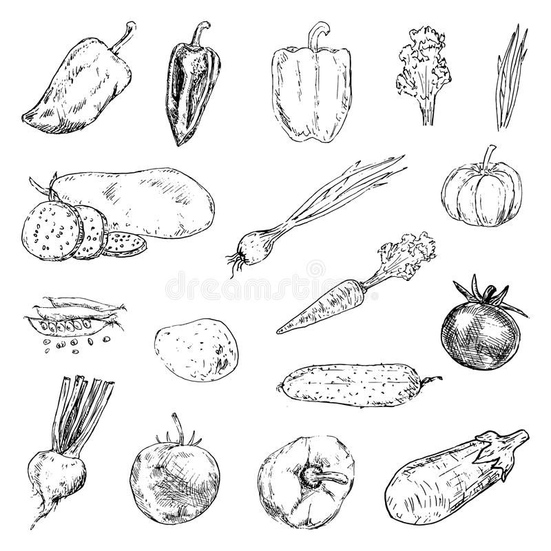 Нарисованные рукой doodles установленные овощами Значки стиля эскиза Decoratio иллюстрация вектора