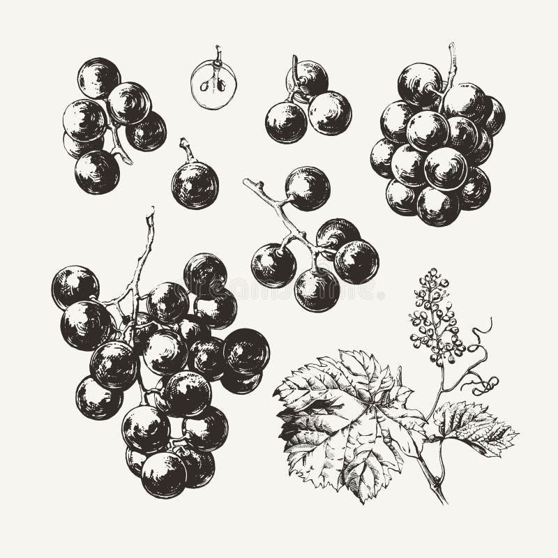 Нарисованные чернилами виноградины вина бесплатная иллюстрация